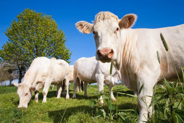 Единый сельскохозяйственный налог: все, о чем следует знать предпринимателю
