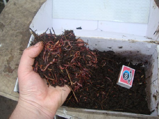 Разведение червей как бизнес - заработок на биогумусе
